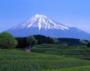Mount Fuji Seen from Green Tea Field in April
